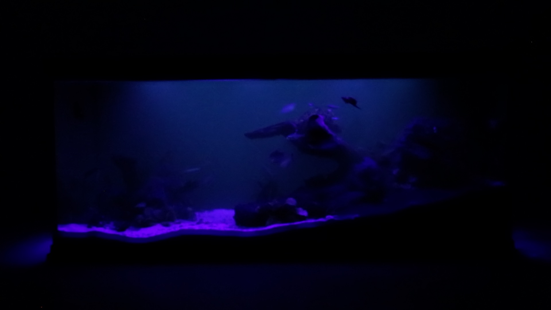 Aqua Effects - Violet