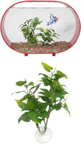 Betta Plants Philo Plant Zoo Med Laboratories Inc