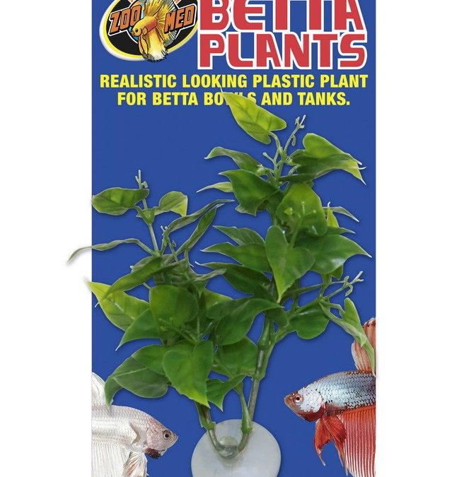 Betta Plants™ – Philo Plant