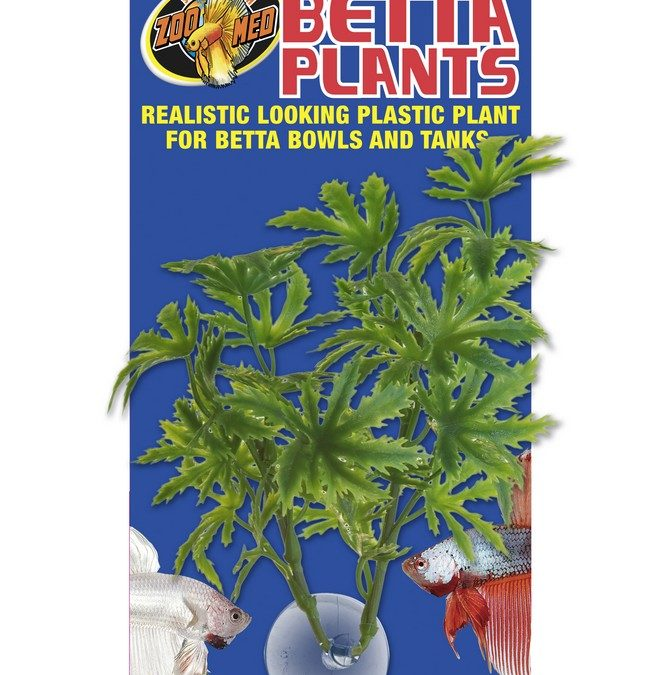 Betta Plants™ – Papaya