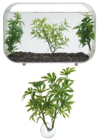 Betta Plants Papaya Zoo Med Laboratories Inc