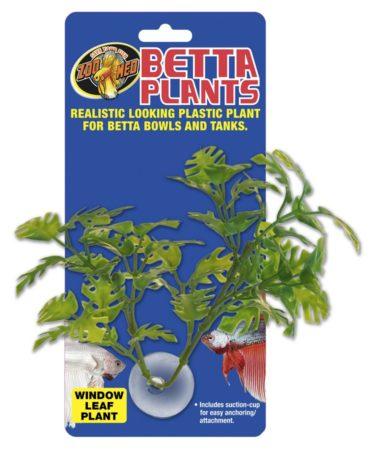 Betta Plants™ - Window Leaf