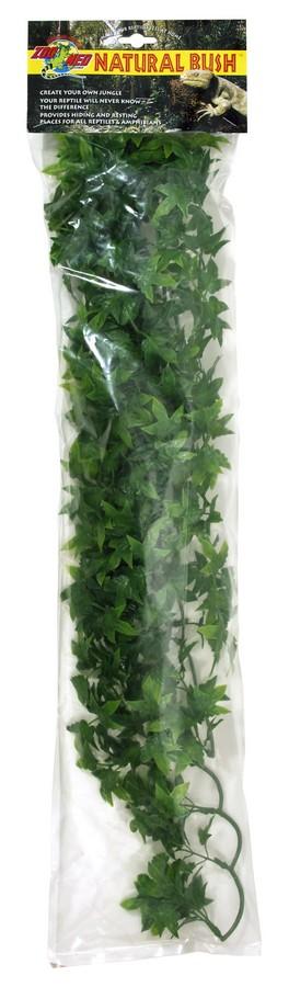 Natural Bush Plants Congo Ivy Zoo Med Laboratories Inc