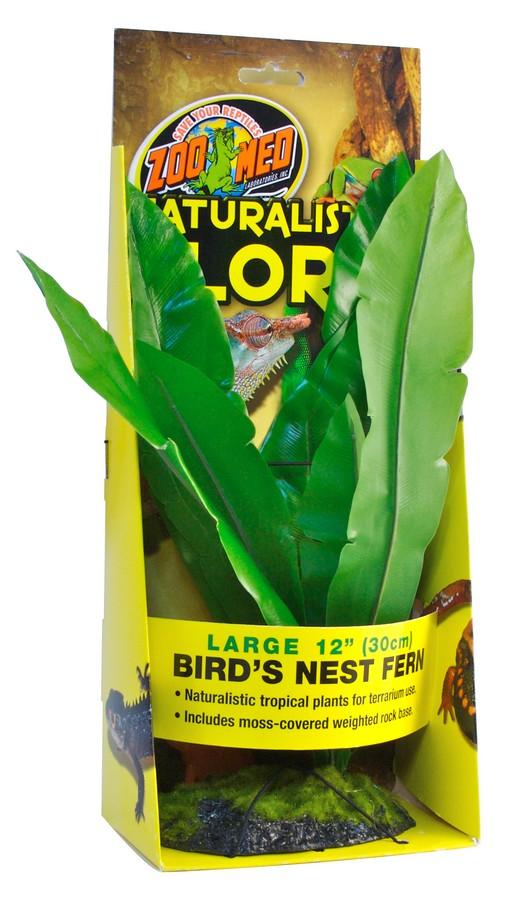 Naturalistic Flora Bird S Nest Fern Zoo Med