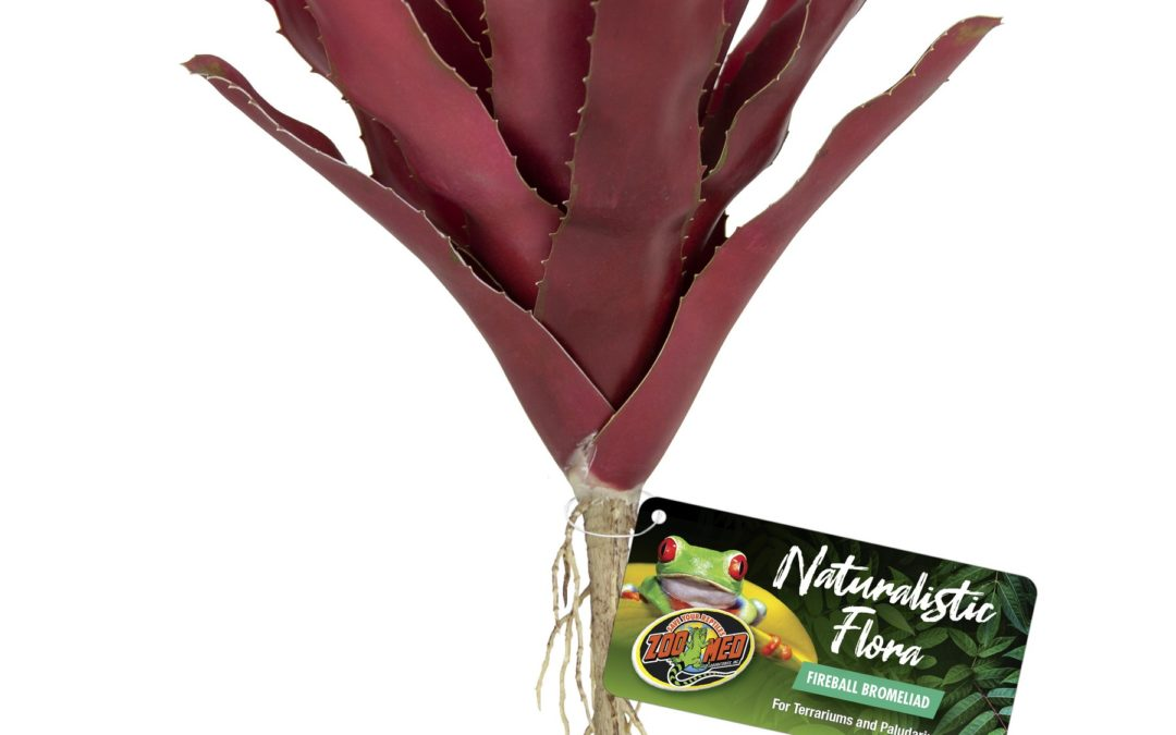 Naturalistic Flora – Fireball Bromeliad