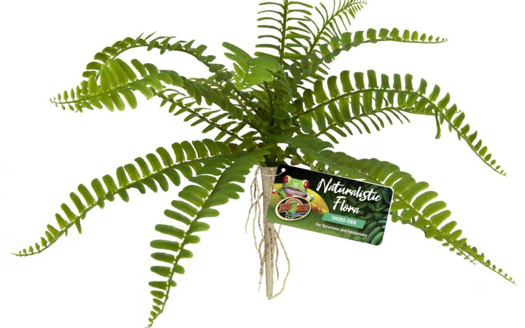Naturalistic Flora – Sword Fern