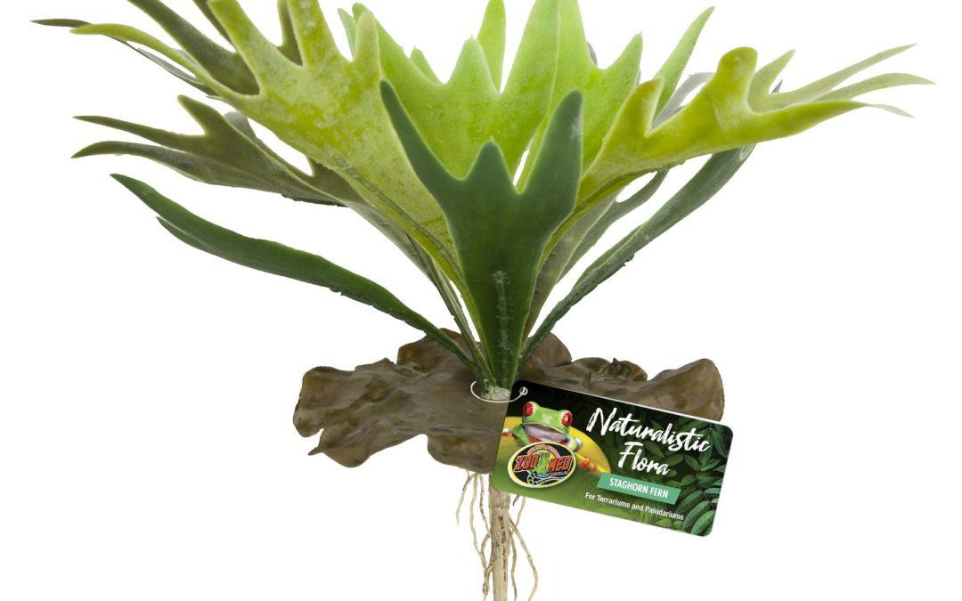 Naturalistic Flora – Staghorn Fern