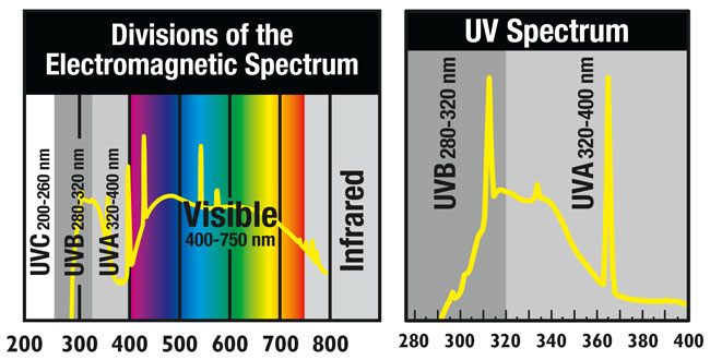 spekter svetlobe