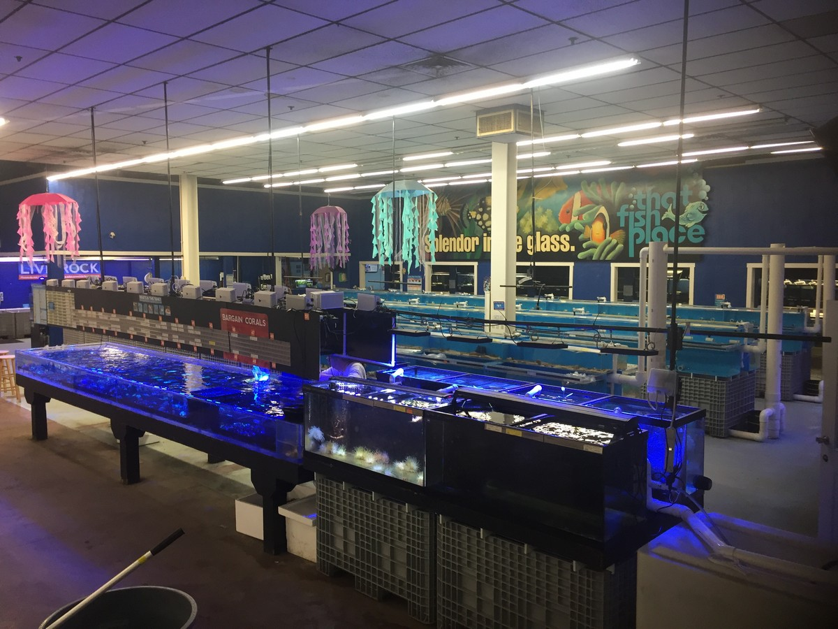 Store of the month june 2017 zoo med laboratories inc for The fish place