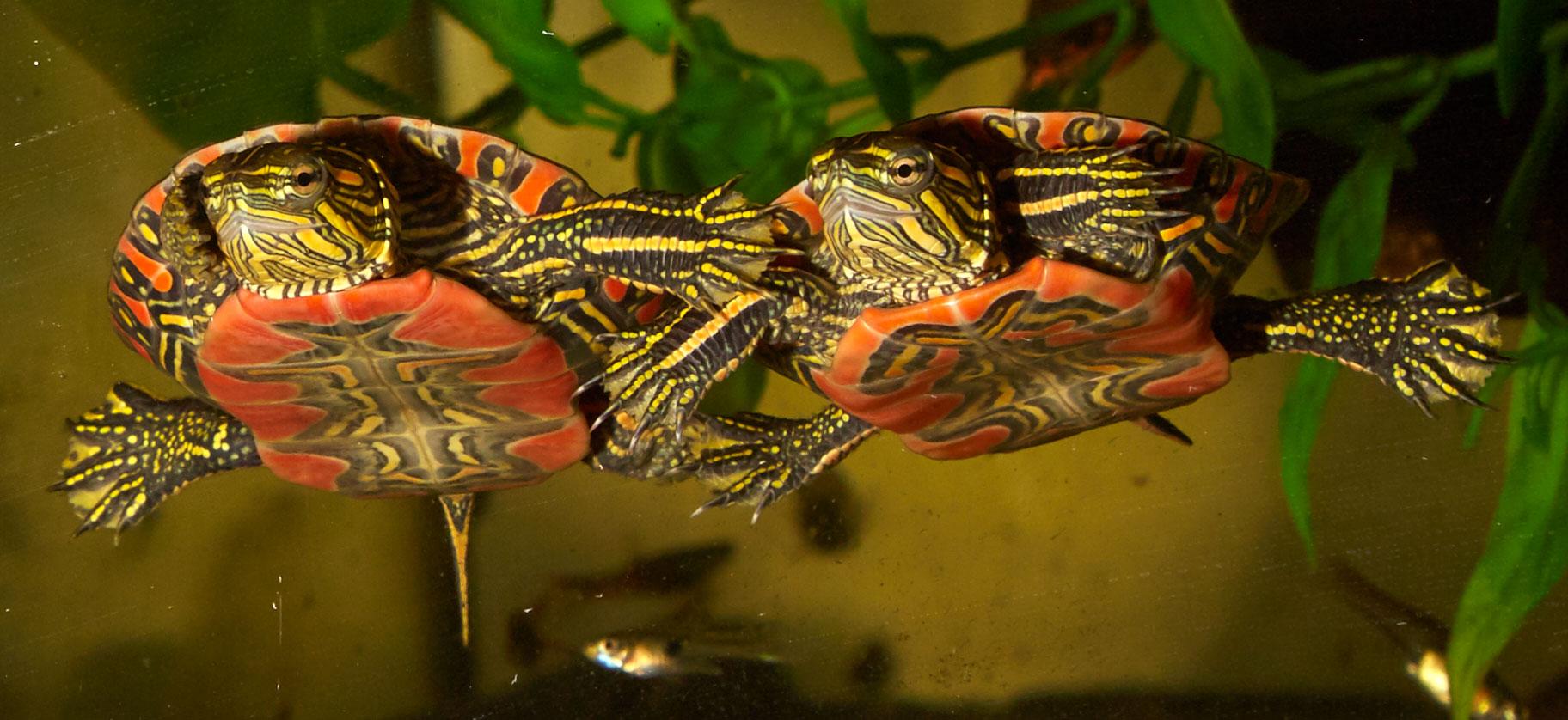 Aquatic Turtles Zoo Med Laboratories Inc