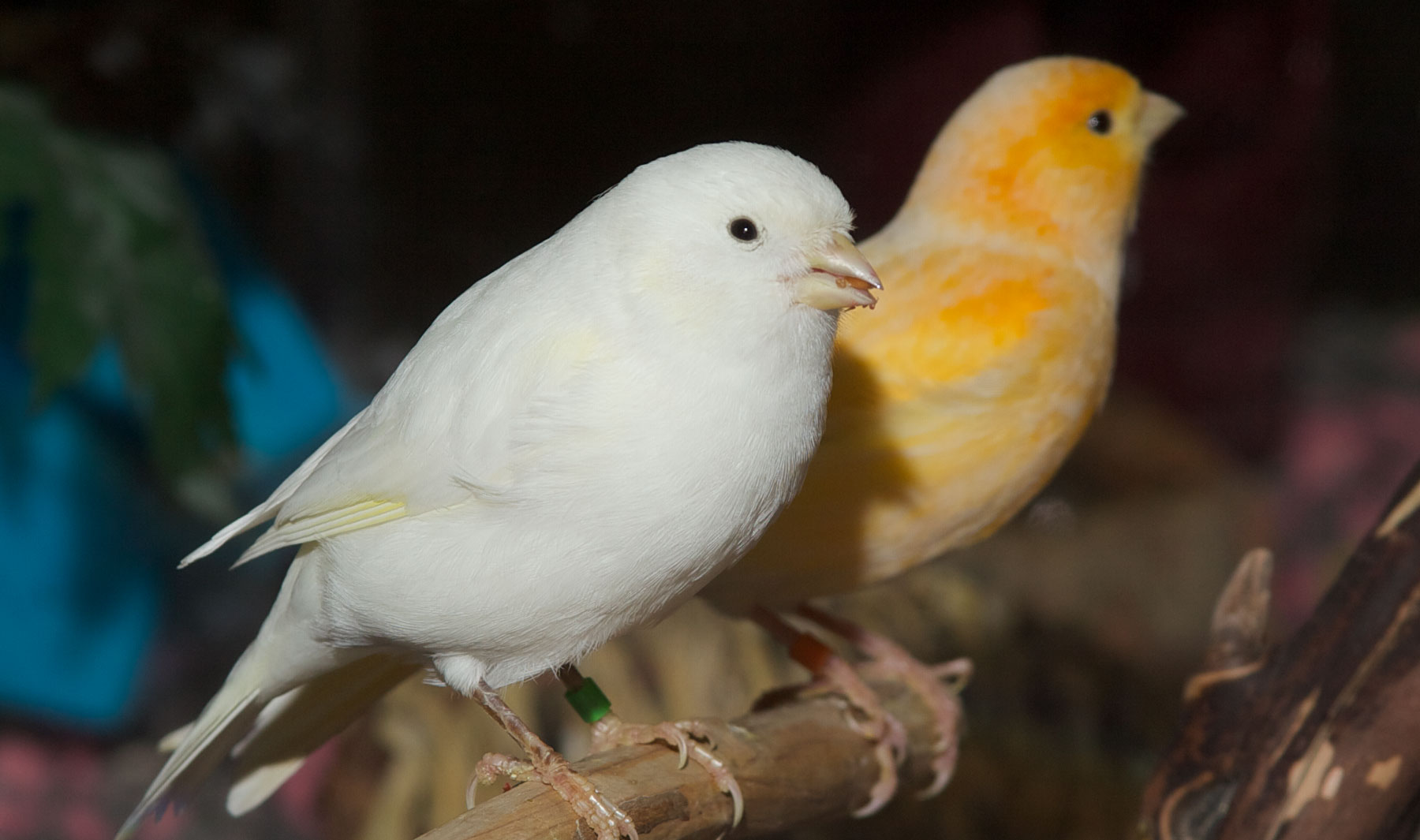 Birds Zoo Med Laboratories Inc